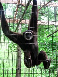 Monkey IS amused